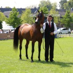 "F Tayyar Ibn Al Lahab (Al Lahab x F Tahani Bint Shamaal), the ""Best European Arabian"" of the Egyptian Event Europe!"