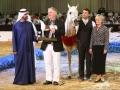 Al Lahab - Champion of the Dubai International Arabian Horse Championship