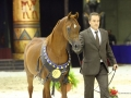 F Shamaal Victorious at European Championships in Verona